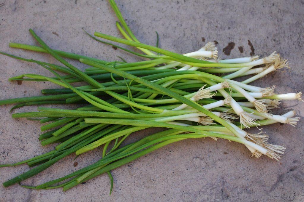 scallions, green onions, spring onions