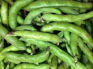 Green Fava Bean pods