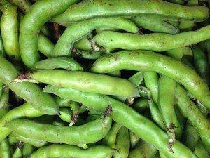 Green Fava Bean pods