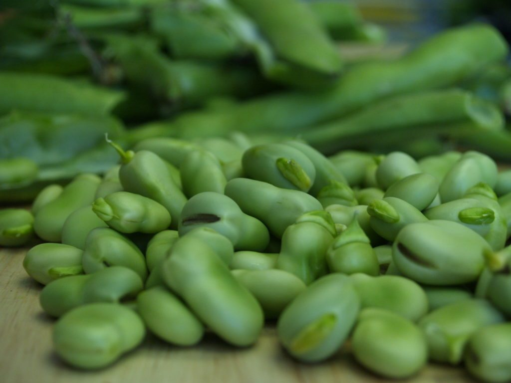 Fava Beans in shell